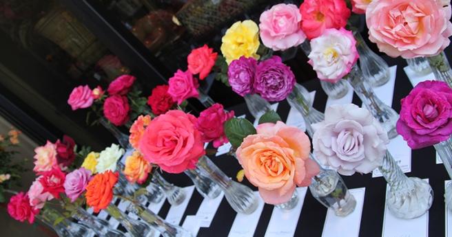 Roses Image Courtesy of RogersGardens.com