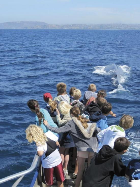 Whale Sail Dana Point Courtesy of ocean-institute.org